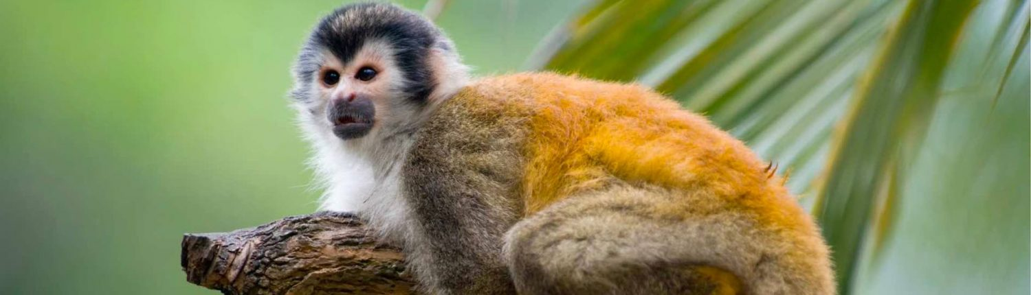 essential costa rica wildlife squirrel monkey