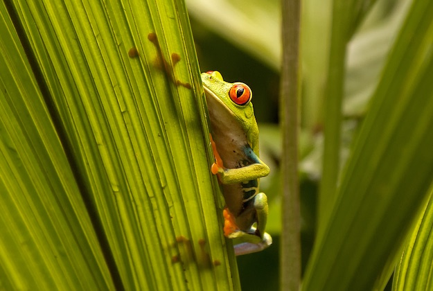 ree frog seen on a costa rica holiday