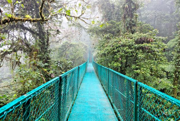 cloud forest bridges in monteverde