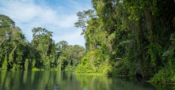 tortuguero jungle canals in costa rica
