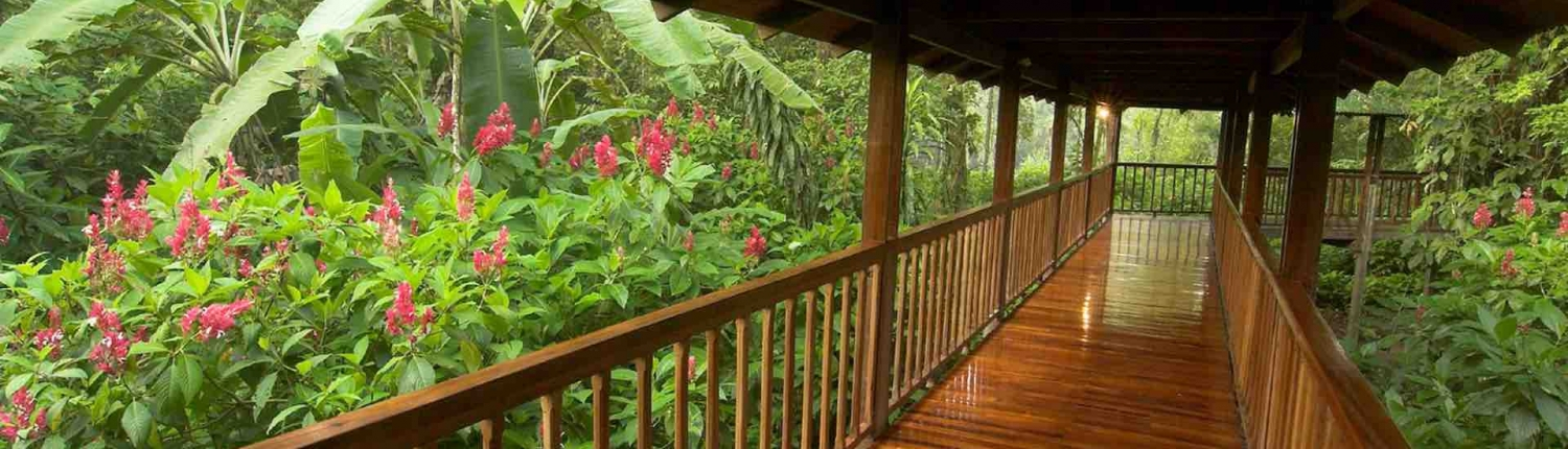 elevated walkways at selva verde lodge