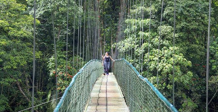 suspension bridge at selva verde lodge costa rica