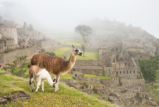 llama and clouds at machu picchu peru