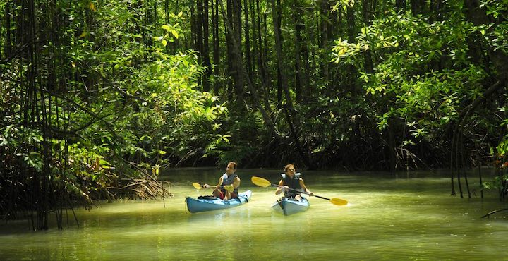 kayaking in the osa peninsula on a costa rica tour