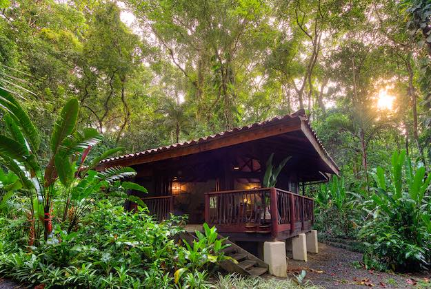 playa nicuesa eco lodge cabin in the rainforest