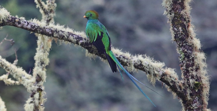 quetzal spotted on costa rica tour
