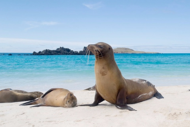 galapagos sea lion on the beach