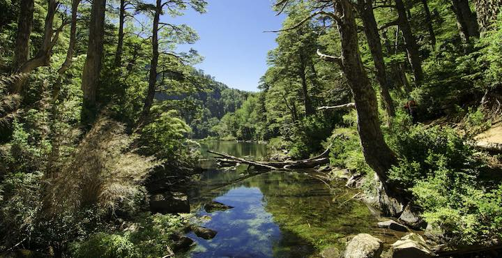 huerquehue national park tour in chile lake district