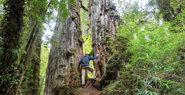hiking in pumalin national park chile